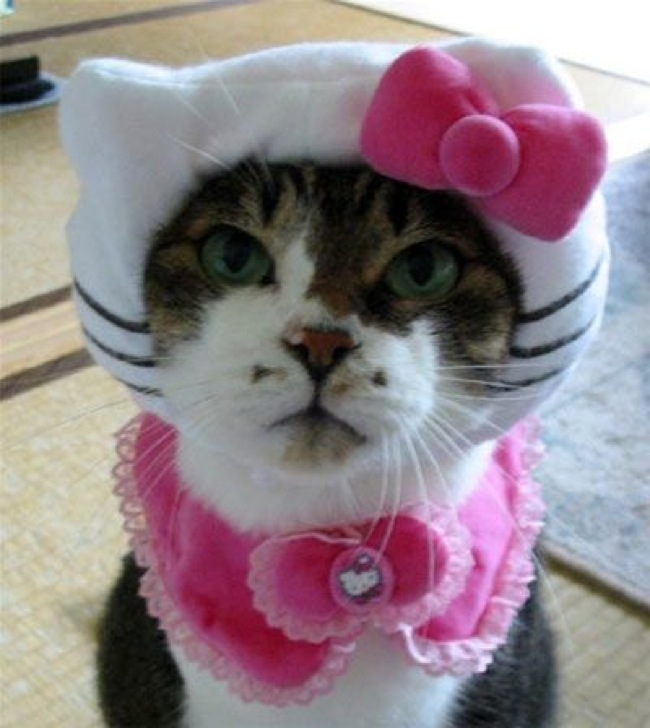 Hello Kitty Kat